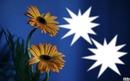 *fleurs du soleil*