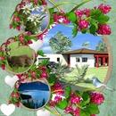 Cadre nature fleuri
