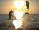 couché de soleil avec dauphin
