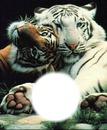deux tigre +... =famille