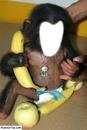 petit bebe singe