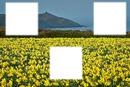 flores amarilass 3