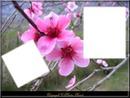 printemps.2