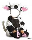 bebe vache