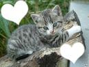 chats coeur