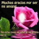 Cc rosa,rosa+texto