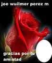 ROSA DE AMISTAD