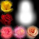 tony Rose