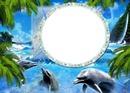 Cadre et dauphins