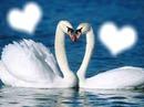 corazon corazon