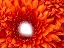 Ma fleur c est toi !