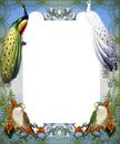 Cadre - paons - oiseaux