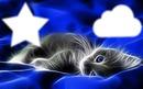 chat étoile nuage