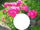 cadre des fleurs photos