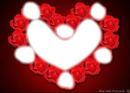 7photo rose