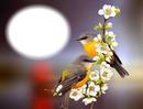 Nature-oiseaux-fleurs-amour