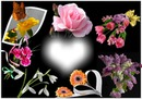 Cadre fleurs de printemps