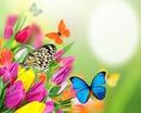 Butterfly & Tulips