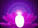 Lotus... Zénitude