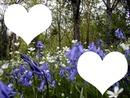 Spring-Printemps -bois fleuri