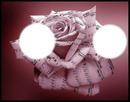 notes de musique rose