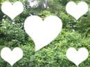 """Coeurs """"nature"""""""
