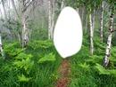 Березовый лес.