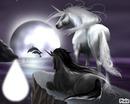 Dauphins et Licornes