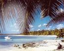 playa  y palmeras