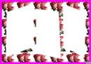 maya1953cadre rose