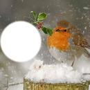 Oiseaux + Neige