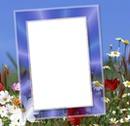 cadre fleuris