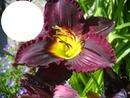 cadre fleur iris
