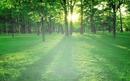 bosque grandioso