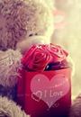 OSITO LOVE