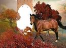 Cc Horse