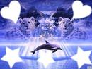 dauphin avec bébé lion