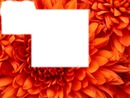 Une fleur pour Toi <3