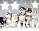 husky 4 cadres