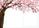 Cerejeiras 2