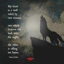 wolf shadow