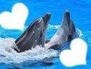 trop beau les dauphins