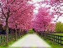 Sentiero in fiore