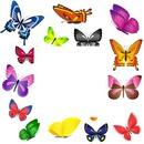 papillons 1 photo