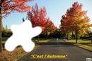 22 septembre 2012*c'est l'automne*