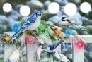 noël oiseaux