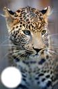 Animal Beauty #5