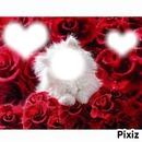 chat dans les rose