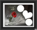 flor roja