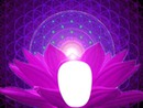Lotus.... Zénitude